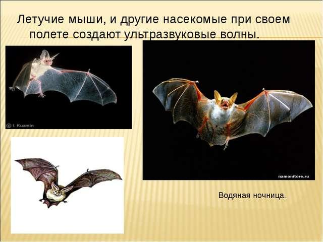Летучие мыши, и другие насекомые при своем полете создают ультразвуковые волн...