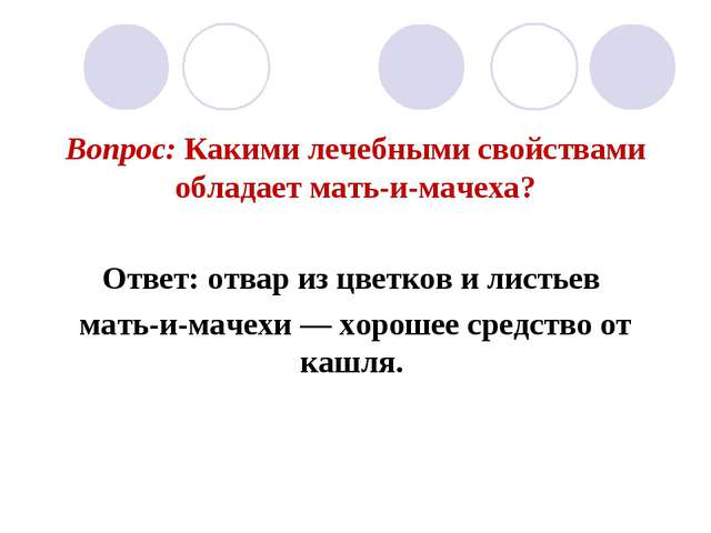 Вопрос: Какими лечебными свойствами обладает мать-и-мачеха? Ответ: отвар из ц...