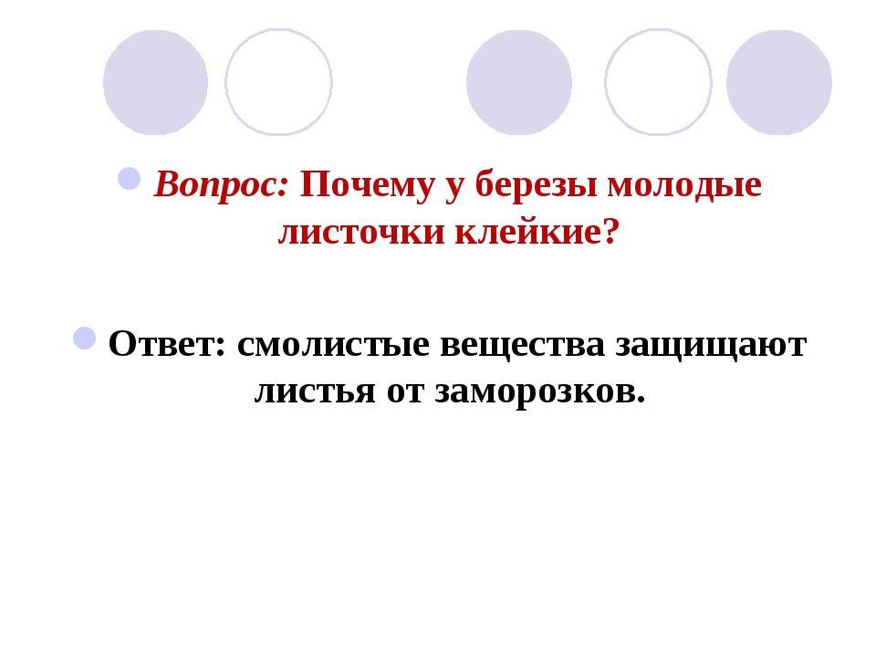 Вопрос: Почему у березы молодые листочки клейкие? Ответ: смолистые вещества з...