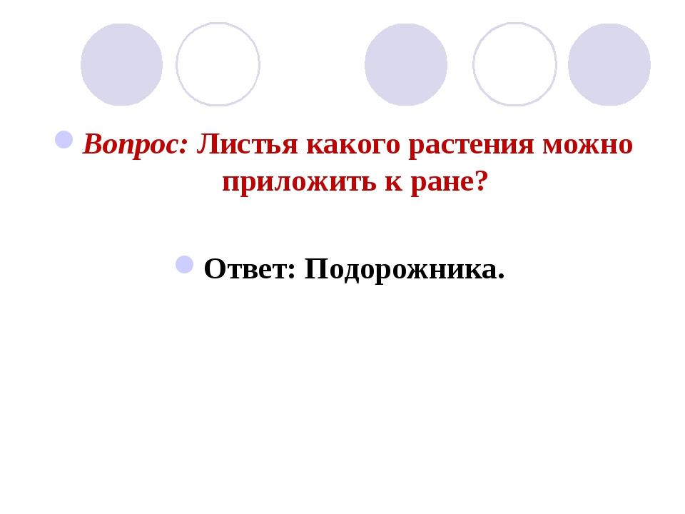 Вопрос: Листья какого растения можно приложить к ране? Ответ: Подорожника.