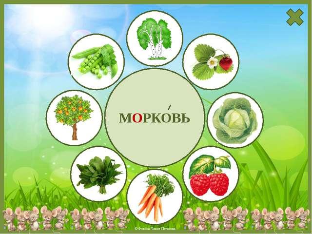 МОРКОВЬ © Фокина Лидия Петровна