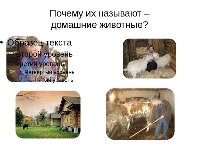 Почему их называют – домашние животные?