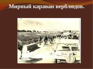 Мирный караван верблюдов.