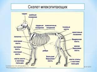 """Скелет млекопитающих 26.07.2015 Соложнина Н.И.,КУгушева А. А. """"Внутреннеее ст"""