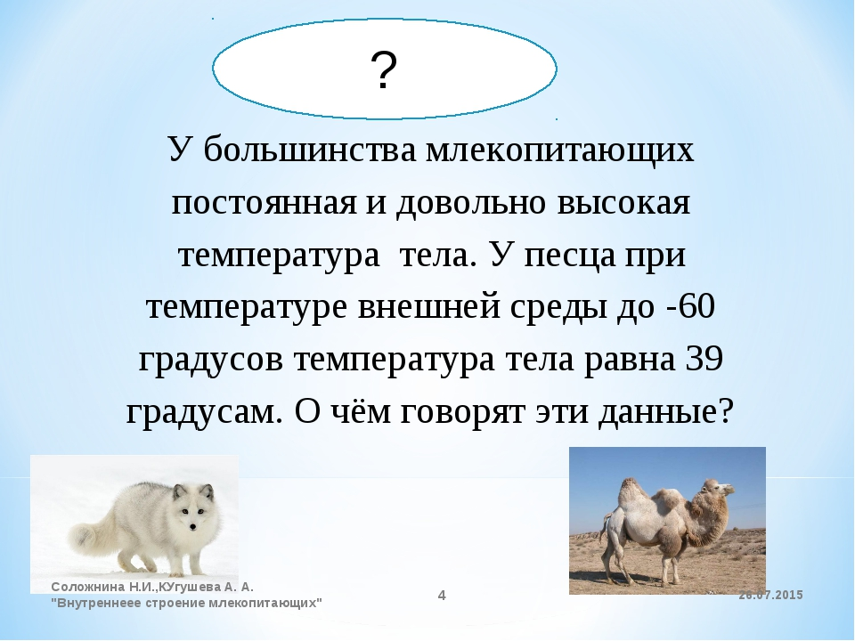 У большинства млекопитающих постоянная и довольно высокая температура тела. У...