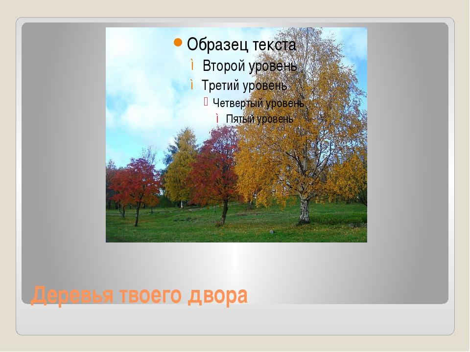 Деревья твоего двора