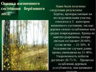 Оценка жизненного состояния берёзового леса. Нами были получены следующие рез