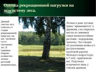 Оценка рекреационной нагрузки на экосистему леса. Лесные и даже луговые травы