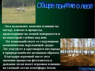 Леса оказывают заметное влияние на погоду, климат и процессы, происходящие н
