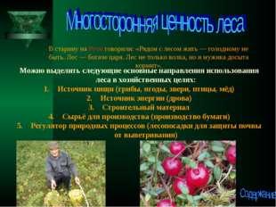 В старину на Руси говорили: «Рядом с лесом жить— голодному не быть. Лес— бо