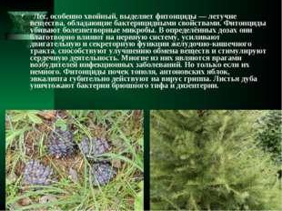 Лес, особенно хвойный, выделяет фитонциды— летучие вещества, обладающие бак
