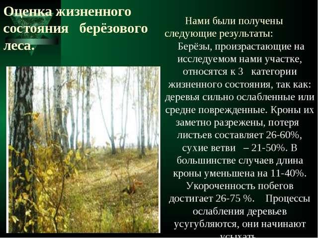 Оценка жизненного состояния берёзового леса. Нами были получены следующие рез...