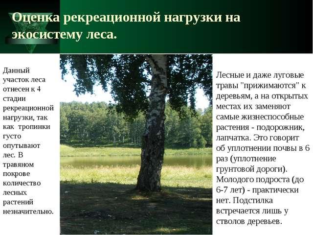 Оценка рекреационной нагрузки на экосистему леса. Лесные и даже луговые травы...