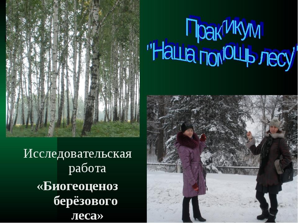 Исследовательская работа «Биогеоценоз берёзового леса»