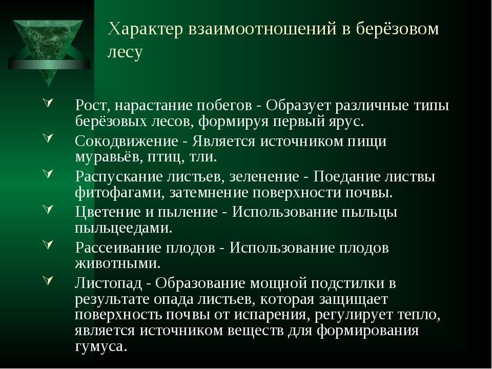Характер взаимоотношений в берёзовом лесу Рост, нарастание побегов - Образуе...