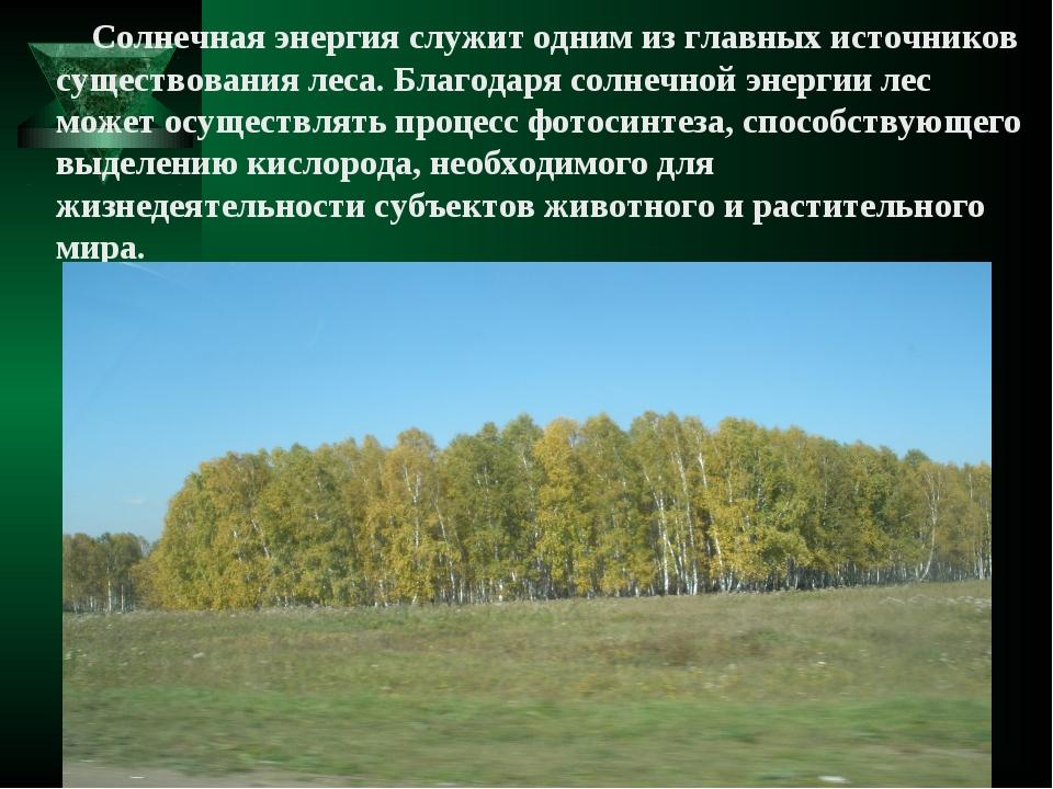 Солнечная энергия служит одним из главных источников существования леса. Бла...