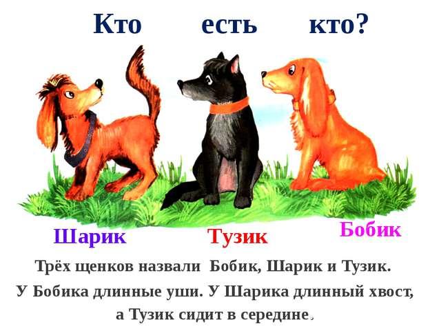 Кто есть кто? Трёх щенков назвали Бобик, Шарик и Тузик. У Бобика длинные уши...