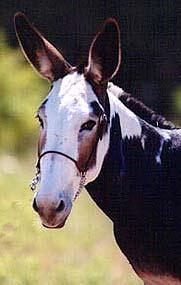 http://zooclub.ru/attach/horses/180.jpg