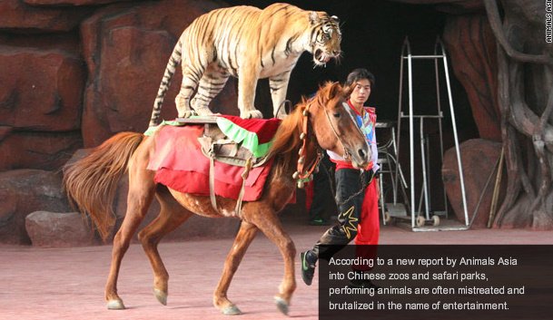 http://4.bp.blogspot.com/_1oeI_YTvkMU/TISw6flv05I/AAAAAAAAXp0/D9rmHMI1_VY/s640/China-circus-cruelty.jpg