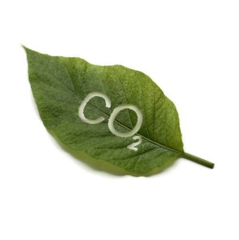 E:\углекислый газ\3.4.2_Environment_CO2_ImageR_rdax_95.jpg