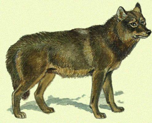 волк 3.jpg