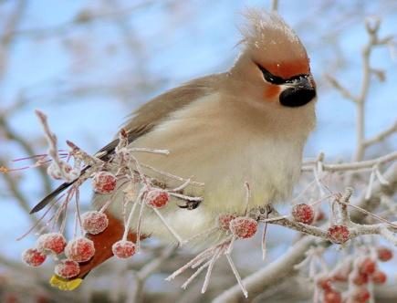 Описание: E:\птица.jpg