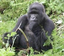 http://www.vnschool.net/images/Baihoctructuyen/Theworld/Rwanda/Rwanda7.jpg