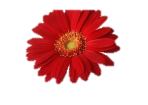 http://img1.liveinternet.ru/images/attach/c/4/79/160/79160333_photo32.jpg