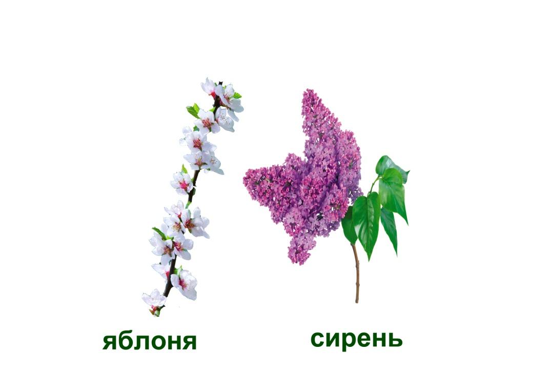 C:\Documents and Settings\я\Рабочий стол\Язык цветов. Презентация. Элина\22.отчаяние - загадка.jpg