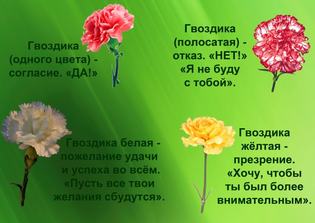 C:\Documents and Settings\я\Рабочий стол\Язык цветов. Презентация. Элина\18.гвоздики.jpg