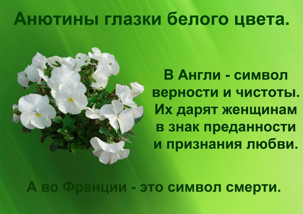C:\Documents and Settings\я\Рабочий стол\Язык цветов. Презентация. Элина\17.важные различия.jpg