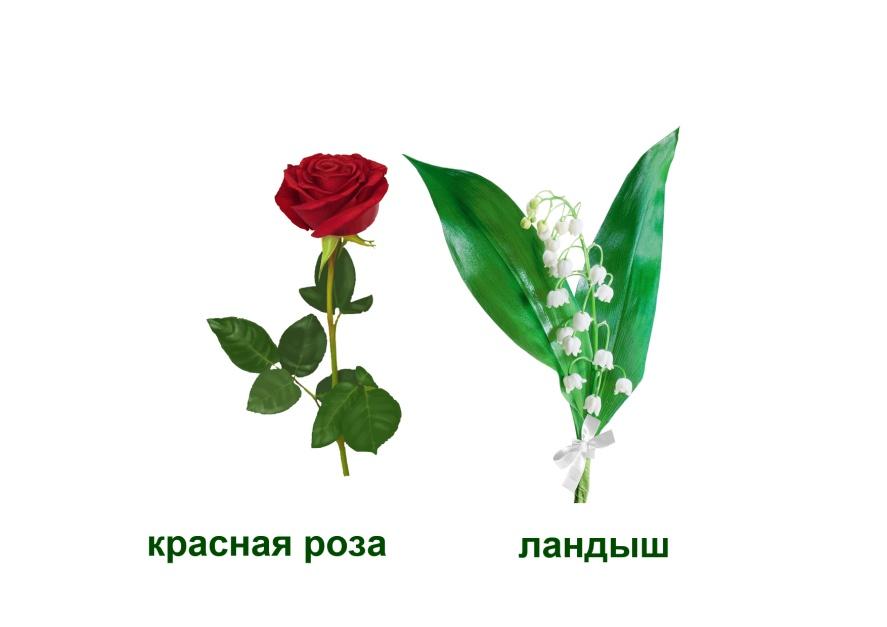 C:\Documents and Settings\я\Рабочий стол\Язык цветов. Презентация. Элина\20.признание в любви- загадка .jpg
