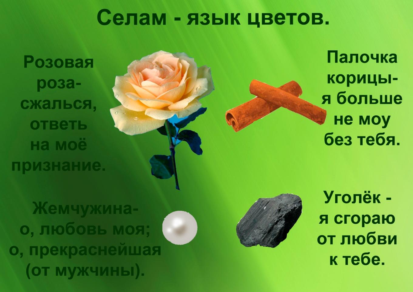 C:\Documents and Settings\я\Рабочий стол\Язык цветов. Презентация. Элина\16.Селам - язык цветов.jpg