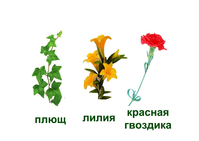 C:\Documents and Settings\я\Рабочий стол\Язык цветов. Презентация. Элина\21.букет для мужчины - загадка.jpg
