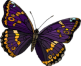 http://funforkids.ru/pictures/butterfly_forkids/butterfly165.png