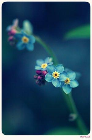 Цветы незабудки в Фото арт , похоже на