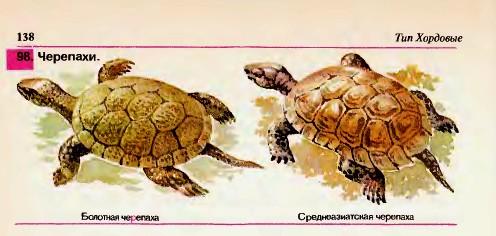 Отряд Черепахи.