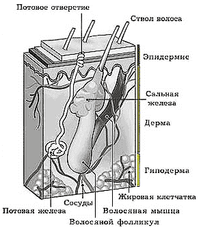 http://www.bestreferat.ru/images/paper/44/25/4492544.png