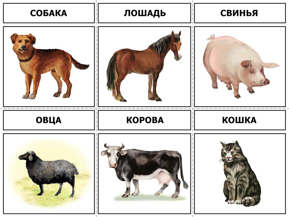 C:\Users\1\Desktop\голоса животных\1989 razv.jpg