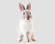 hello_html_m5d417add.jpg