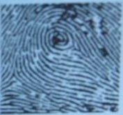 Папиллярные узоры: павлиний глаз