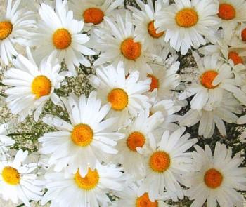 http://www.rulec.ru/foto/romaska.jpg