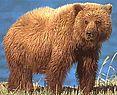 Картинки животных - Медведь