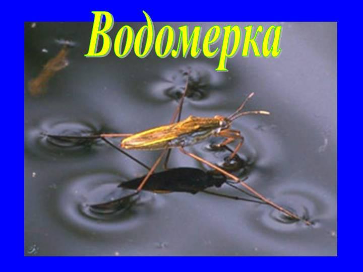 0014-014-Vodomerka