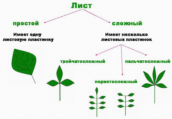листьев деревьев и