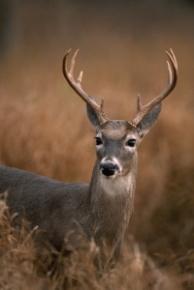 http://img.animal-photos.ru/deers/deers-11.jpg