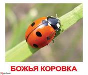 http://im0-tub-ru.yandex.net/i?id=06ae4d9873a0a3a52cbf995372352582-51-144&n=21