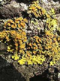 http://www.lichenhouse.narod.ru/images/3.jpg