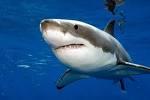 акула.bmp