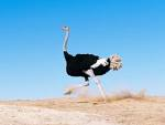 страус.bmp